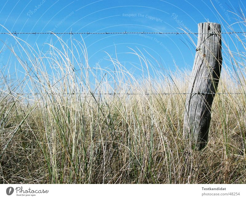 Fence in the dunes Fence post Barbed wire Wood Beach Close-up Blue sky Beautiful weather Beach dune Old Landscape
