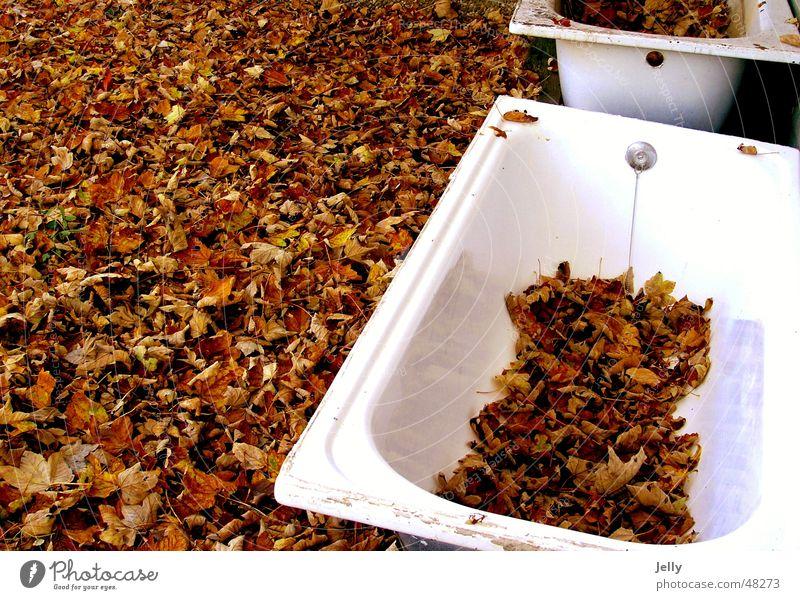 autumn bath Bathtub Leaf Autumn White Brown Floor covering Nature