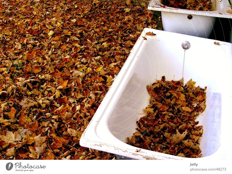 Nature White Leaf Autumn Brown Floor covering Bathtub