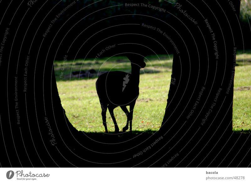 reh Roe deer Light Green Tree Park Animal Deer Wild animal Shadow Lawn