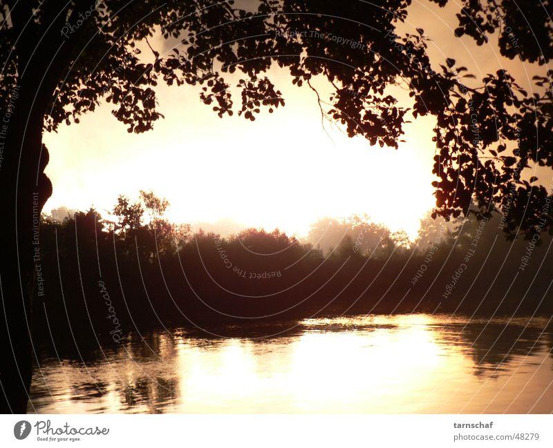 detonation Horizon Tree Silhouette Explosion Reflection Light Flashy Calm Sky River Bright Threat