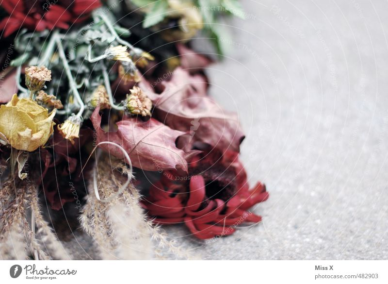 Flower Leaf Sadness Death Autumn Blossom Moody Gloomy Decoration Transience Grief Decline Bouquet Lovesickness Limp Faded