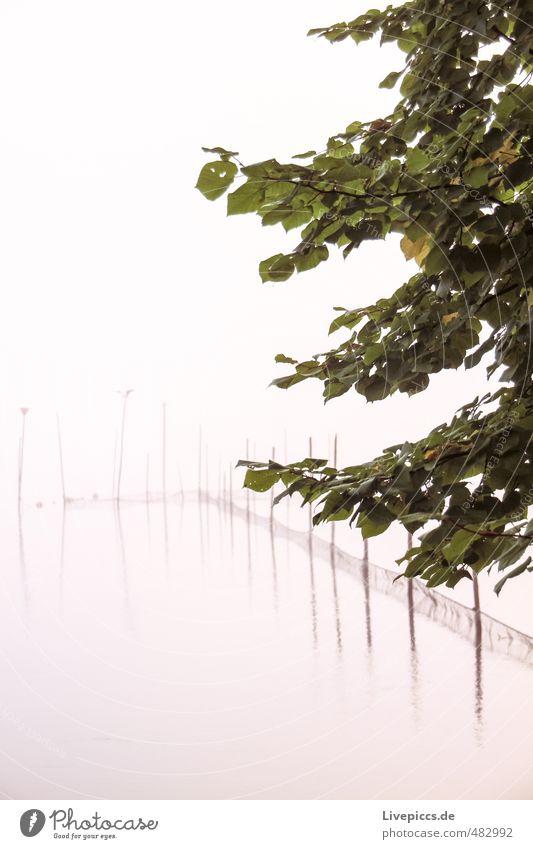 Müritz river bank Environment Nature Landscape Water Autumn Fog Plant Tree Leaf Wild plant Lakeside Cold Wet Natural Patient Calm Idyll Colour photo
