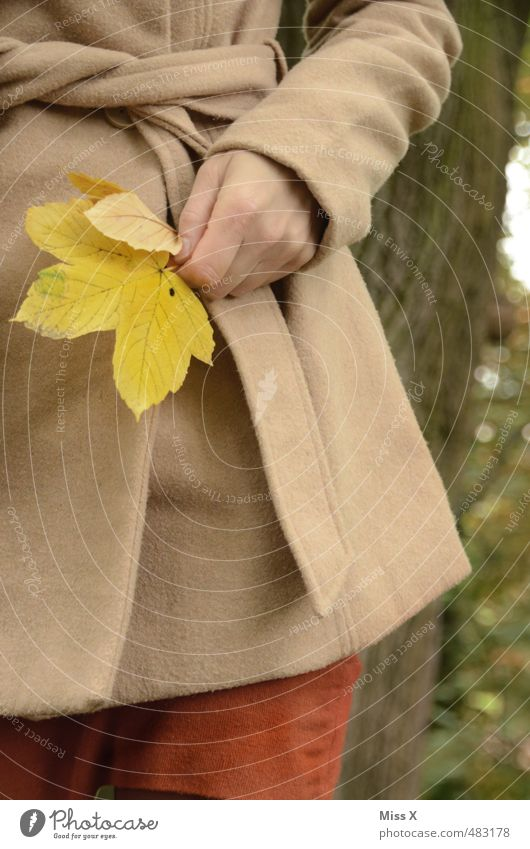 maple Human being Feminine Young woman Youth (Young adults) Hand 1 Autumn Leaf Jacket Coat Yellow Joy Happiness Contentment Joie de vivre (Vitality) Colour
