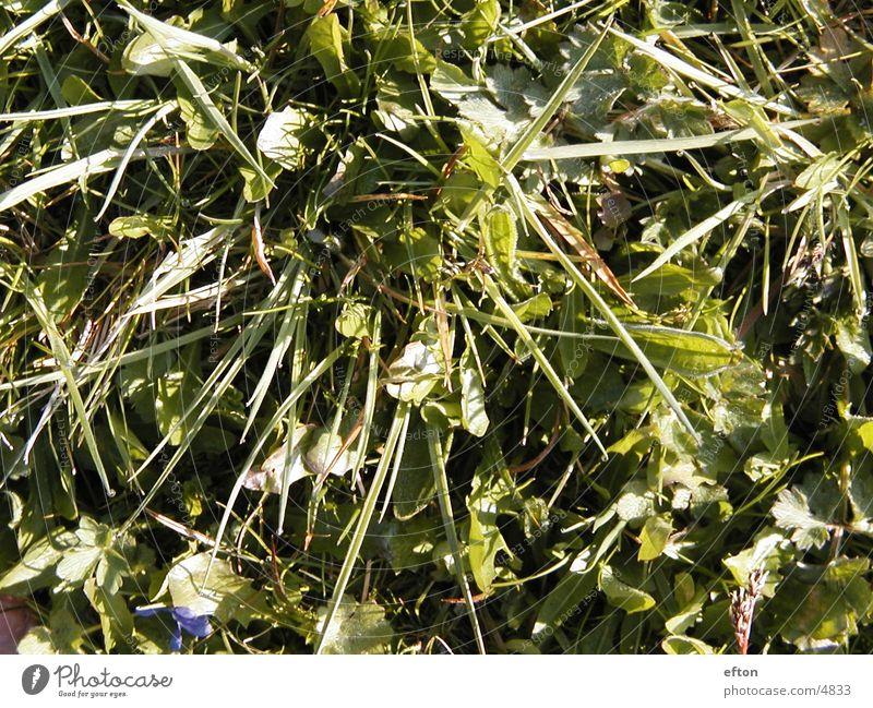 grass Grass Green
