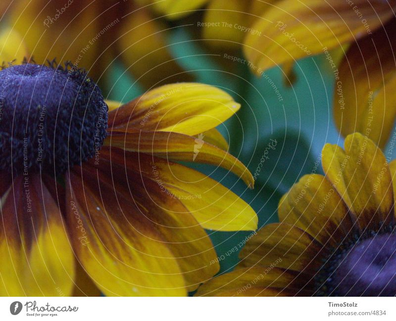 The Flower Darkness Sunflower Yellow Green Blur Cold colour depth Detail