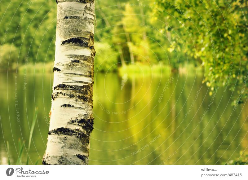 Birch tree trunk with lake in background Birch bark Tree trunk Pond Lake Yellow Green White Structures and shapes Nature Landscape Plant Beautiful weather