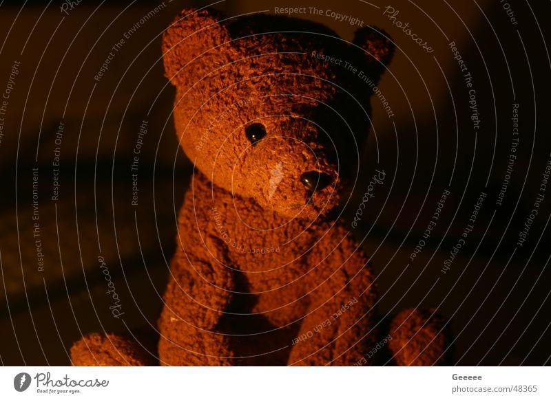 teddy Cuddly toy Teddy bear Cute Sweet Bear