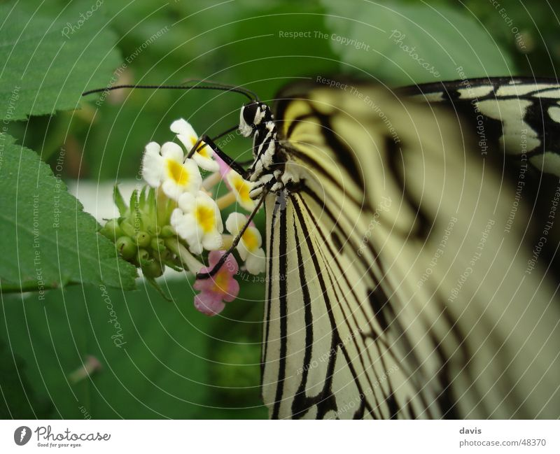 White Green Plant Flower Animal Black Nutrition Flying Insect Butterfly Delicious