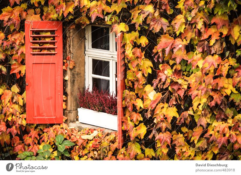 City Green White Plant Animal Leaf House (Residential Structure) Black Yellow Window Wall (building) Autumn Wall (barrier) Garden Brown Orange