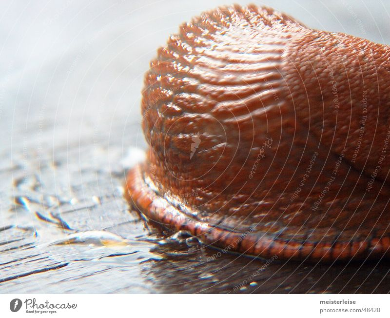 Animal Snail Mucus Slug