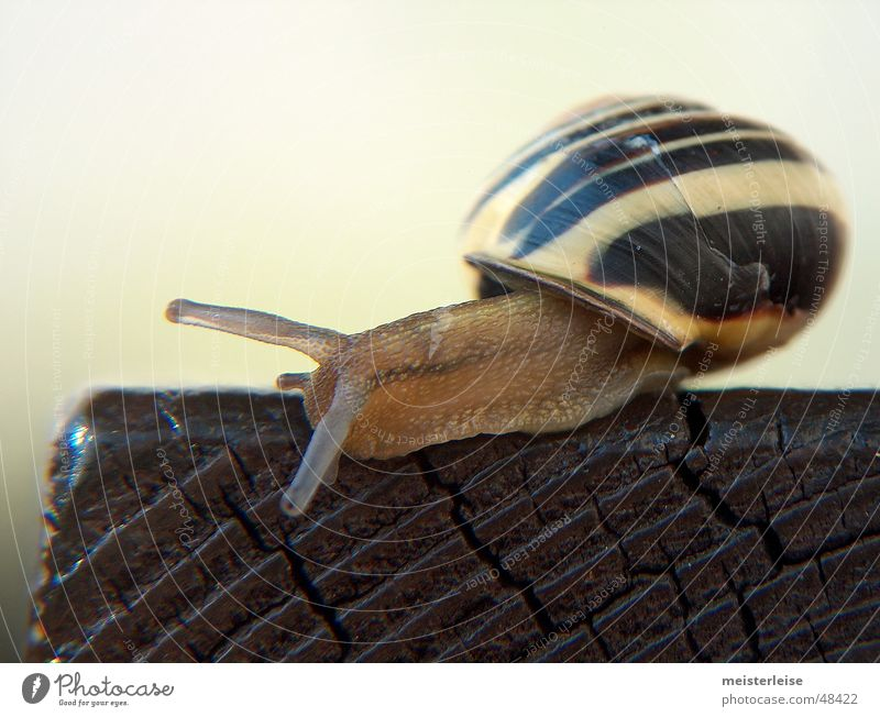 Animal Wood Snail Crawl Slowly Slimy Snail shell Mucus Landscape format