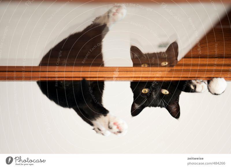Cat White Relaxation Animal Black Lie Brown Observe Pelt Pet Paw Pane Divided