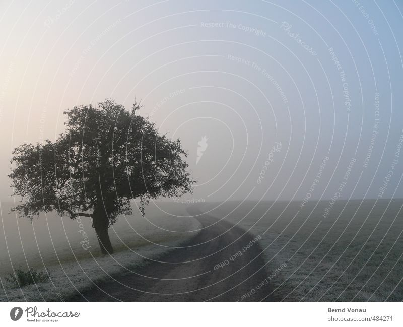 Blue Green Tree Loneliness Calm Cold Meadow Autumn Grass Lanes & trails Gray Natural Horizon Ice Idyll Fog