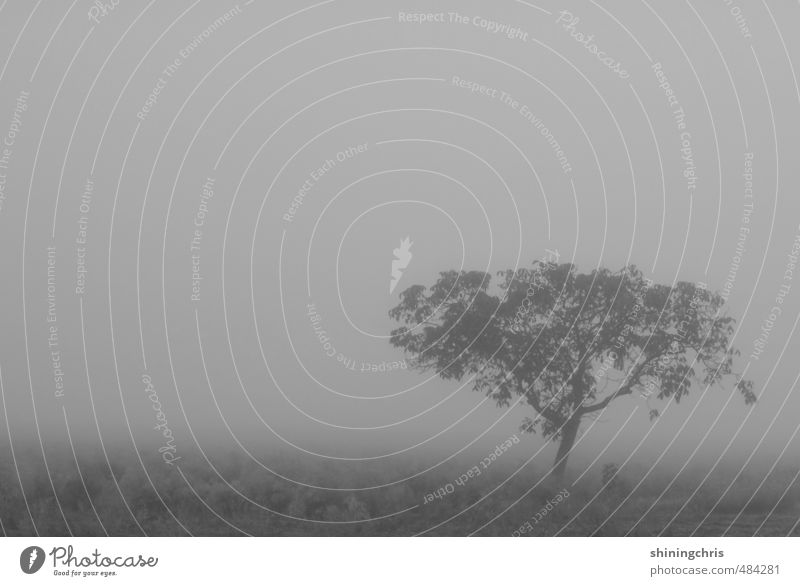 shades of grey Environment Nature Landscape Sky Autumn Winter Bad weather Fog Tree Field Infinity Creepy Gray Calm Grief Longing Loneliness Black & white photo