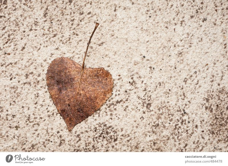 Beautiful Loneliness Leaf Environment Street Love Autumn Natural Brown Friendship Happiness Creativity Heart Joie de vivre (Vitality) Simple Transience