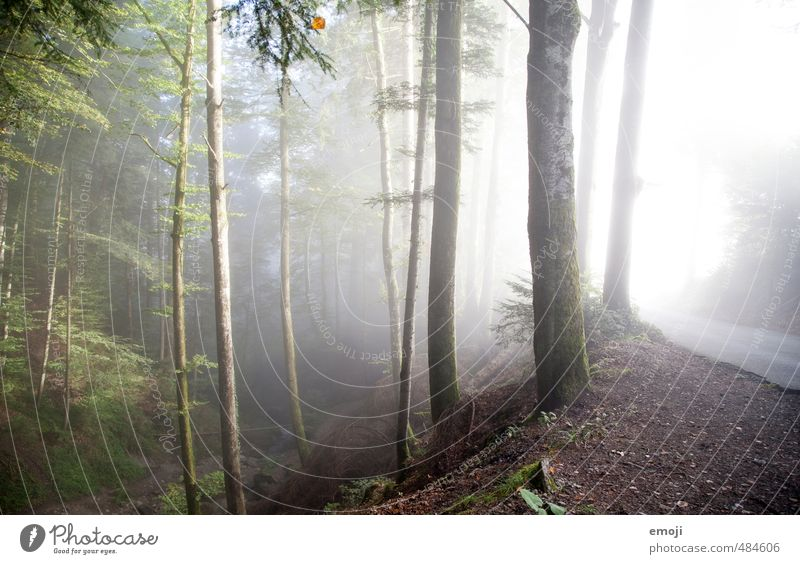 green-grey Environment Nature Landscape Autumn Fog Tree Forest Exceptional Cold Natural Colour photo Exterior shot Deserted Morning Light Sunlight Sunrise