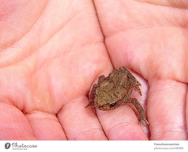 mini frog Sweet Diminutive Life Vacation & Travel Netherlands Lake Meadow big hand Rain To go for a walk