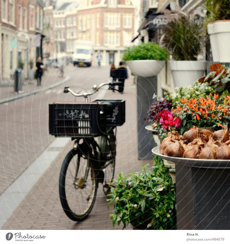 Amsterdam Floristry Shopping Vacation & Travel Sightseeing City trip Cycling Human being Autumn Flower Pot plant Downtown Old town Means of transport Street