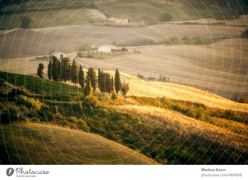 Tuscany Landscape Vacation & Travel Summer Nature Brown Yellow Gold Gray Italy Cypress Light Evening Hill Grassland Field Meadow Tree