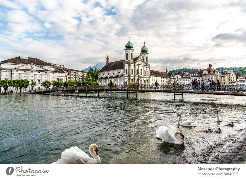 Lucerne - Switzerland Europe Town Tourist Attraction Idyll Vacation & Travel Swan swans Colour photo Exterior shot Day Deep depth of field Long shot