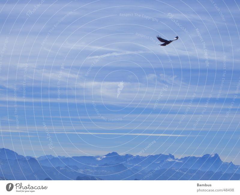 freedom Bird Jackdaw Clouds Flying Mountain Alps Blue Sky