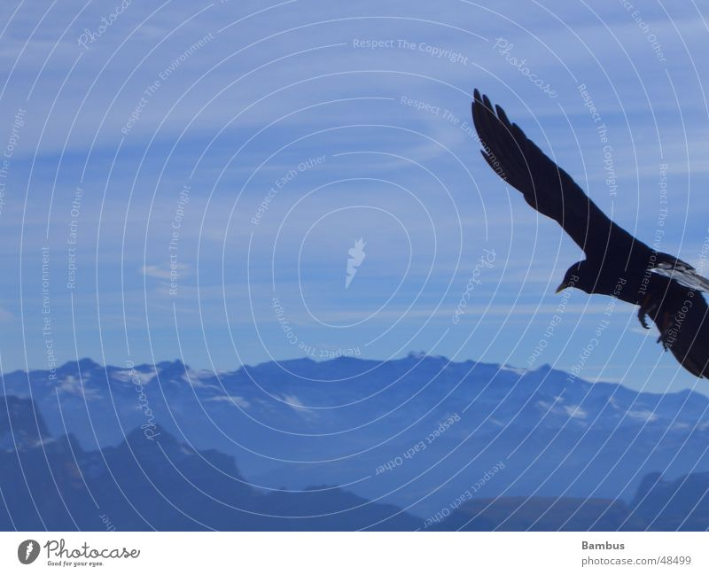 Sky Blue Clouds Mountain Bird Flying Feather Wing Alps Beak Jackdaw