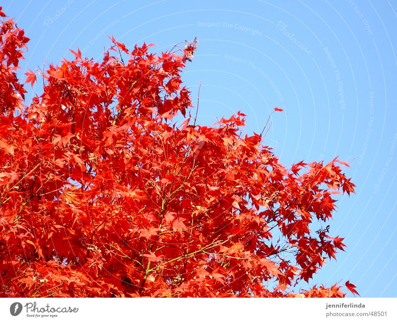 Sky Tree Blue Red Leaf Colour Lamp Autumn Play of colours