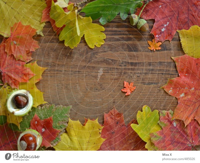 Diegos Autumn Project Leisure and hobbies Handicraft Decoration Thanksgiving Hallowe'en Leaf Wood Multicoloured Autumn leaves Frame Background picture