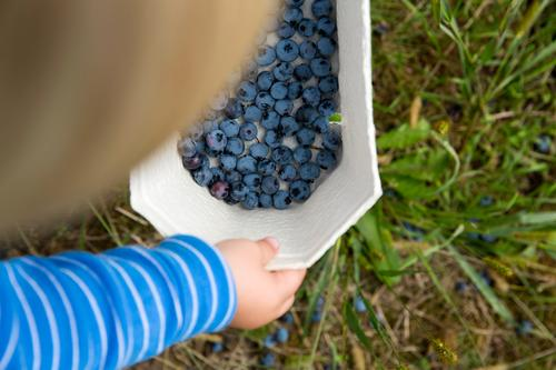 collectors & collectors Food Fruit Blueberry blackberries Eating Picnic Organic produce Vegetarian diet Diet Fasting Slow food Finger food Bowl Child Toddler