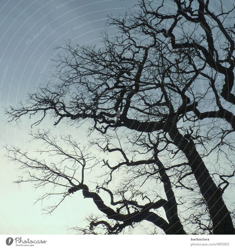 Sky Nature Old Tree Winter Black Dark Environment Time Line Moody Air Wild Change Bizarre