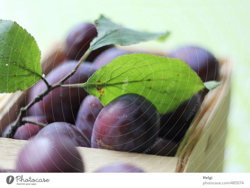 Plum harvest... Food Fruit Nutrition Organic produce Vegetarian diet Leaf Basket Lie Esthetic Authentic Fresh Healthy Delicious Natural Juicy Sweet Yellow Green
