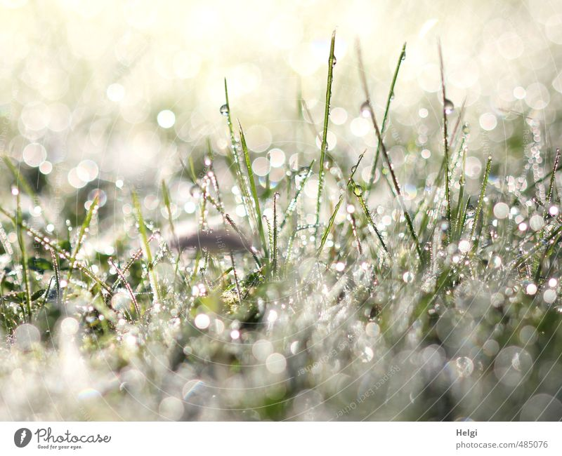 Nature Green White Plant Cold Environment Autumn Grass Gray Small Exceptional Moody Glittering Idyll Illuminate Stand