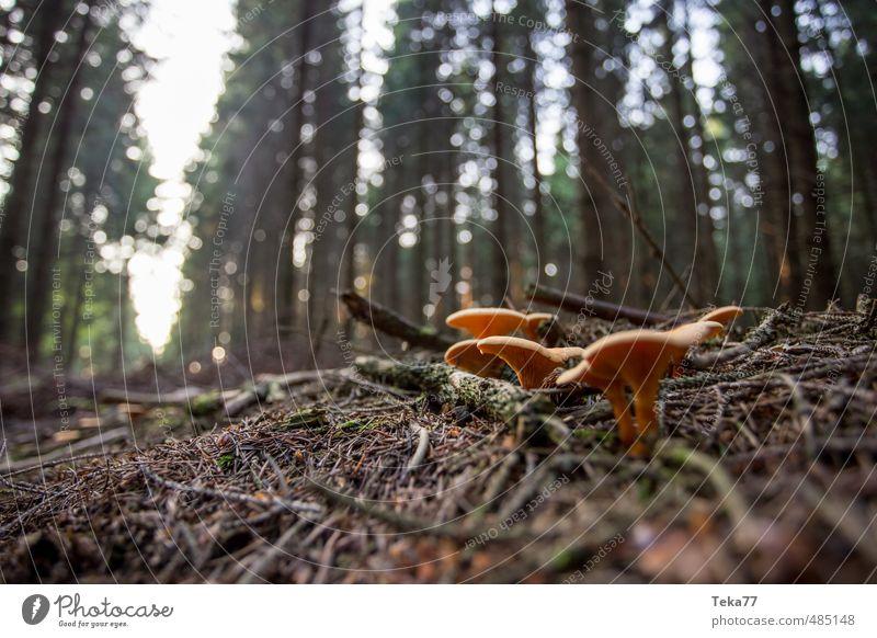 Nature Plant Tree Landscape Animal Environment Orange Bushes Esthetic Mushroom Wild plant Woodground Clearing