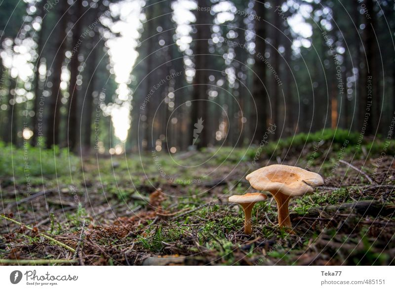 These two Environment Nature Landscape Plant Wild plant Forest Adventure Esthetic Mushroom Mushroom cap Mushroom picker Woodground Colour photo Subdued colour