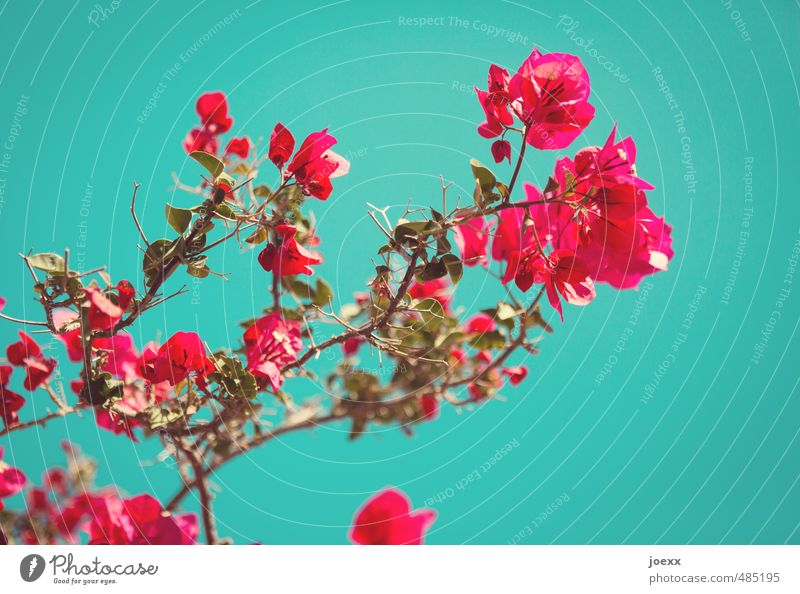 Sky Blue Beautiful Green Colour Plant Summer Red Far-off places Blossom Style Happy Pink Idyll Beautiful weather Blossoming