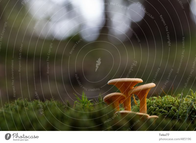 Nature Plant Landscape Forest Environment Esthetic Mushroom Wild plant Woodground