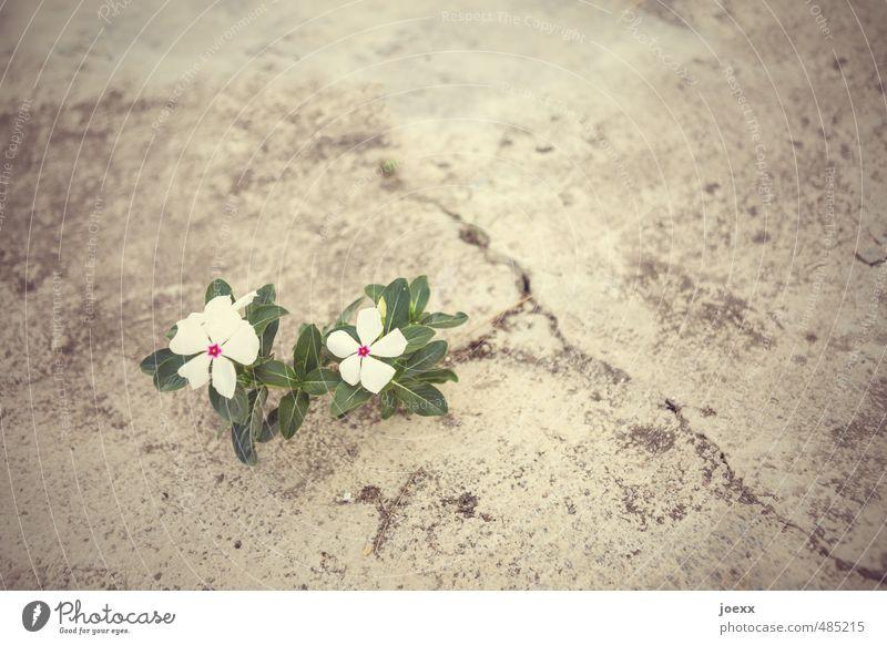life Plant Flower Deserted Simple Uniqueness Brown Green White Joie de vivre (Vitality) Spring fever Power Resolve Colour Life Survive Growth Lanes & trails