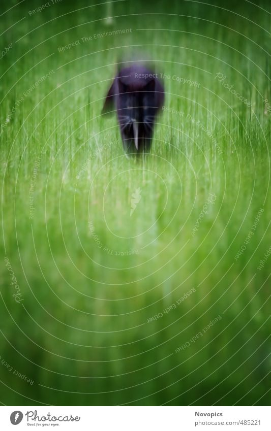 Cat Nature Green Landscape Animal Meadow Movement Walking Political movements Hunting Pet Domestic cat Mystic Vignetting Cat eyes