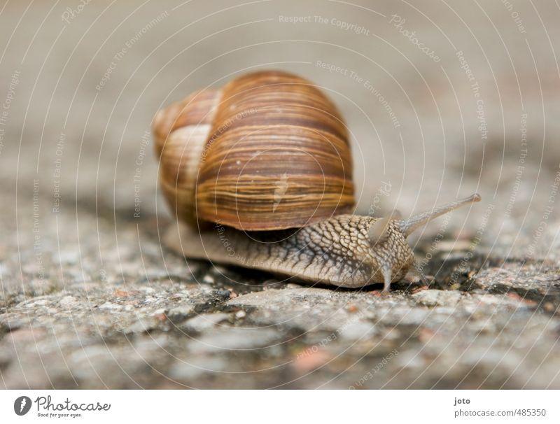 Searching Animal Autumn Snail Vineyard snail Running Cute Serene Environment Lanes & trails Snail shell Slowly Slimy Brown Striped Mollusk Snail slime Calm