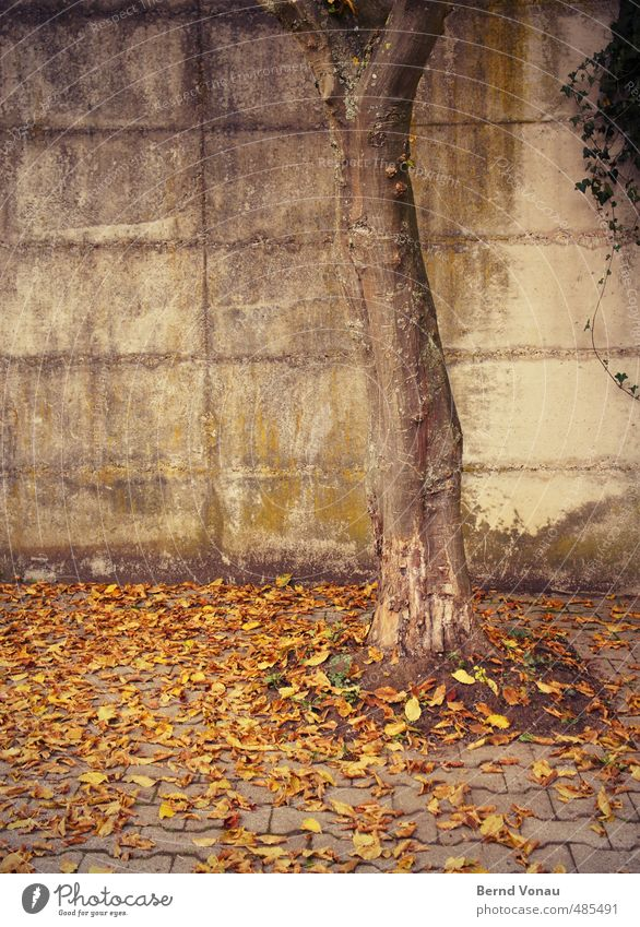 run down Autumn Tree Leaf Wall (barrier) Wall (building) Paving stone Cobbled pathway Brown Yellow Gray Green Black Autumn leaves Dreary Sadness Ivy Concrete