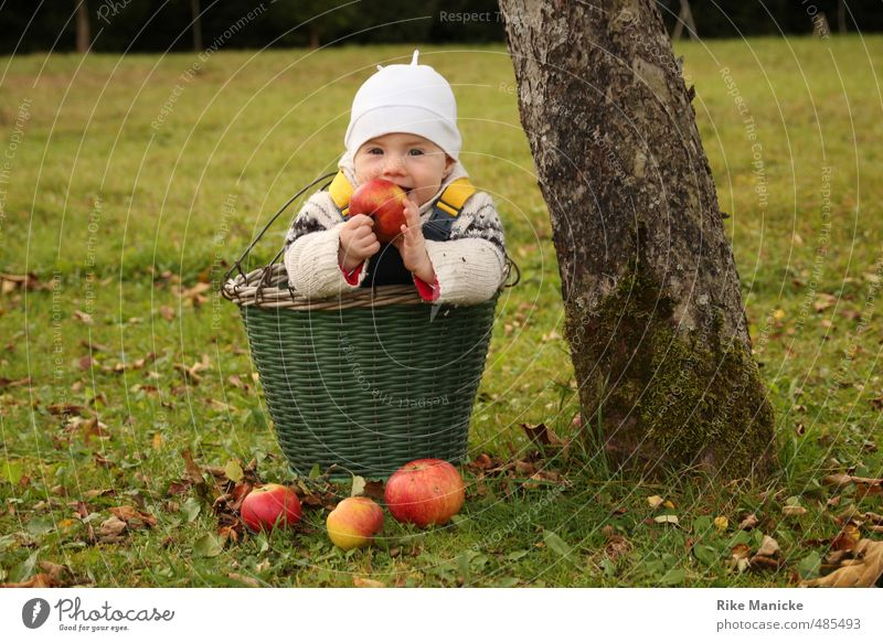 apple harvest Fruit Apple Harvest Thanksgiving Baby Girl 0 - 12 months Nature Autumn Tree Basket To enjoy Smiling Cute Green Contentment Infancy