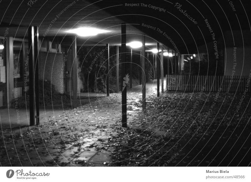 Light in the corridor... Night Leaf Black White Dark Lighting Lamp Autumn Grief Narrow Repression Exterior shot Long exposure Black & white photo