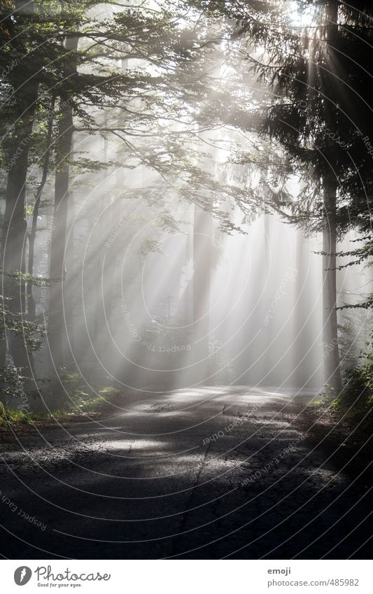 fog line Environment Air Autumn Fog Tree Forest Exceptional Dark Natural Colour photo Subdued colour Deserted Morning Light (Natural Phenomenon) Sunlight