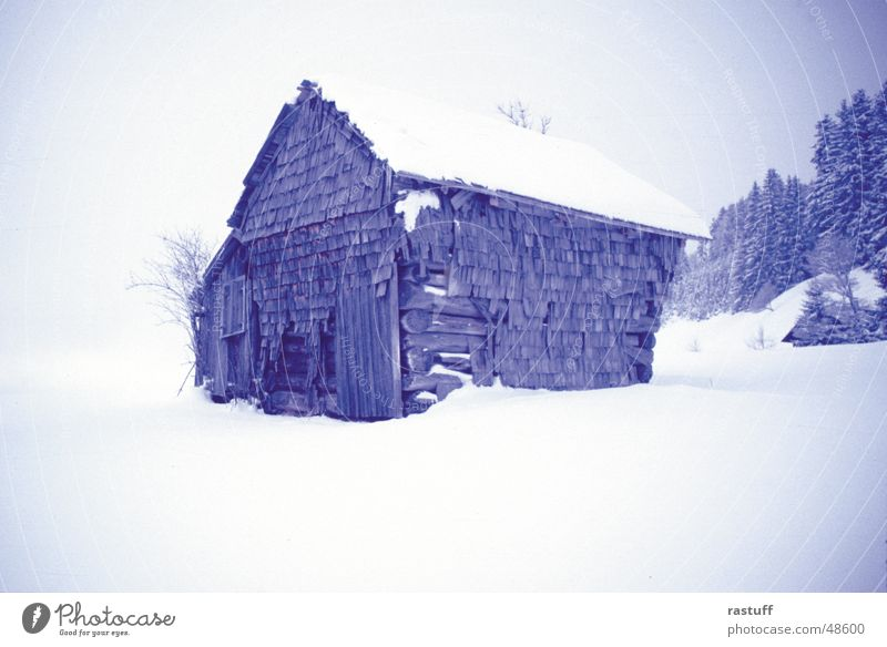 needle1 Barn Derelict White Winter Cold Forest Tree Wood Loneliness Calm Peace Wood flour haystack Hut Snow Blue Wooden board silence trees Sadness
