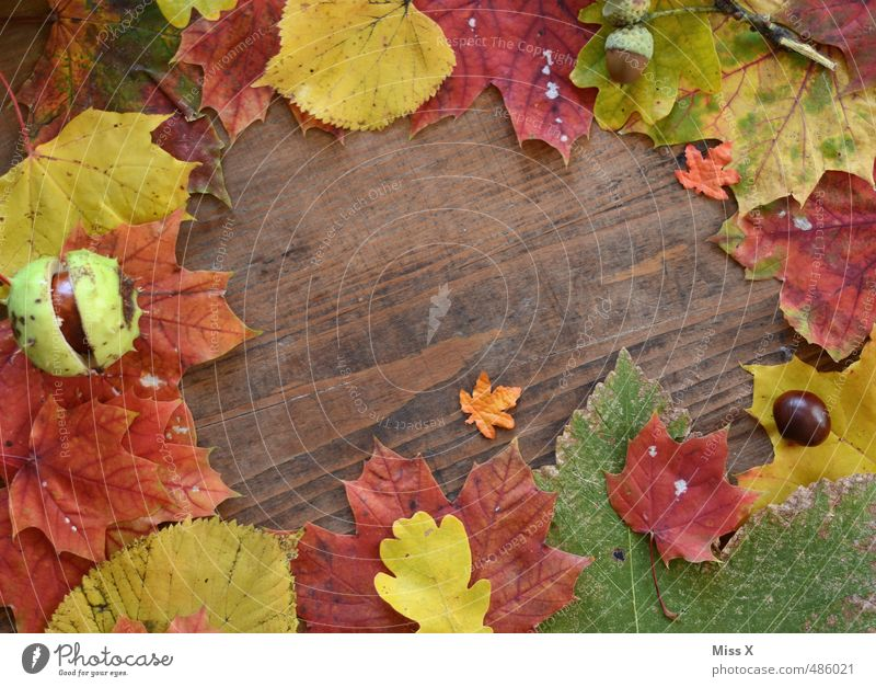 Frame II Handicraft Autumn Leaf Multicoloured Autumn leaves Picture frame Background picture Wood Texture of wood Autumnal colours Still Life Decoration