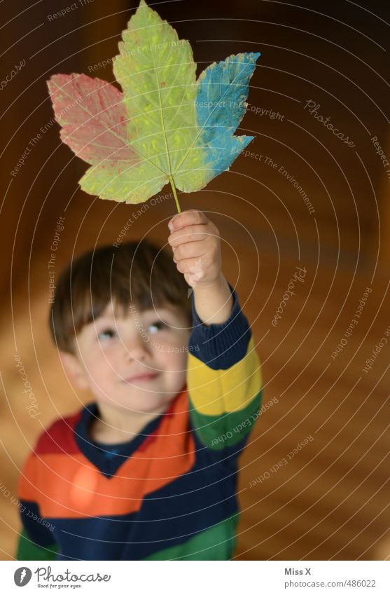Human being Child Colour Joy Emotions Autumn Dye Boy (child) Playing Happy Moody Leisure and hobbies Infancy Decoration Happiness Painting (action, artwork)
