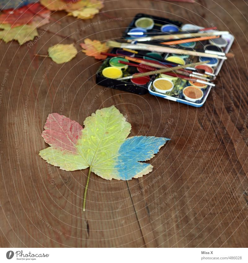 Colour Leaf Autumn Dye Playing Art Leisure and hobbies Decoration Creativity Painting (action, artwork) Autumn leaves Autumnal Maple leaf Paintbrush Handicraft