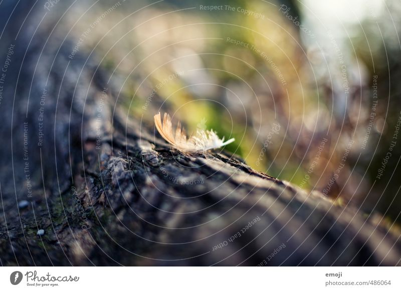 nib Branch Tree Tree trunk Tree bark Feather Surface Natural Soft Colour photo Exterior shot Close-up Deserted Day Shallow depth of field