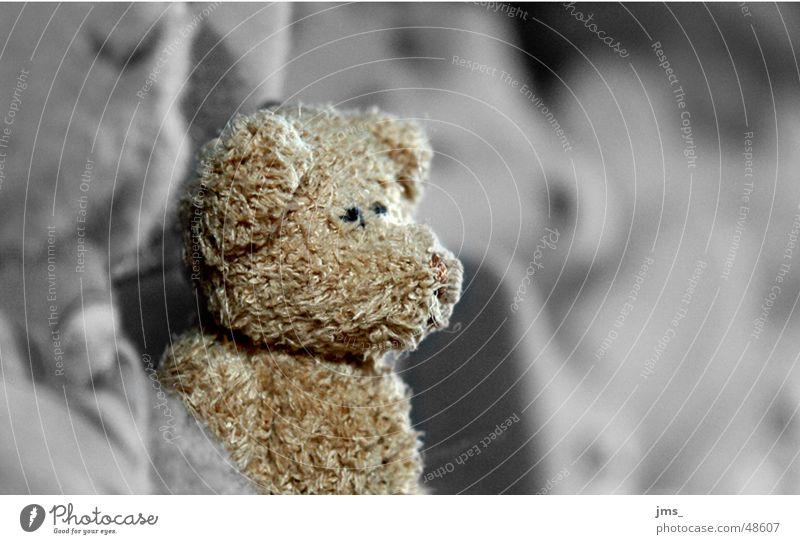 Lonley Teddy bear Black White Loneliness Friendliness unsharp lonley cuddly Bear teddybear